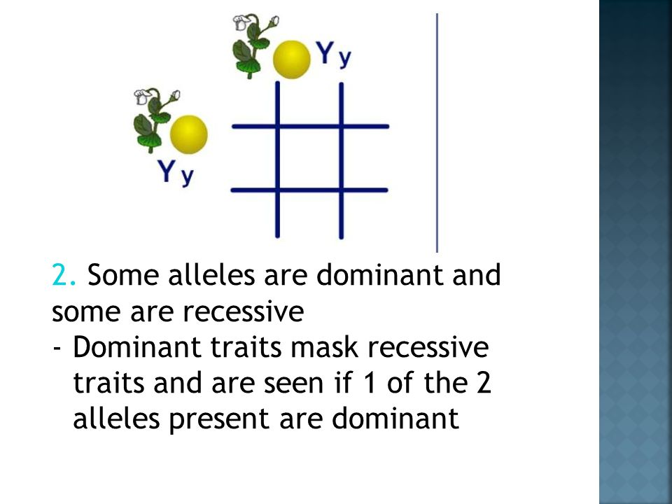 2. Some alleles are dominant and some are recessive