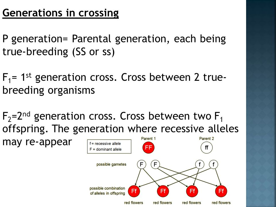 Generations in crossing