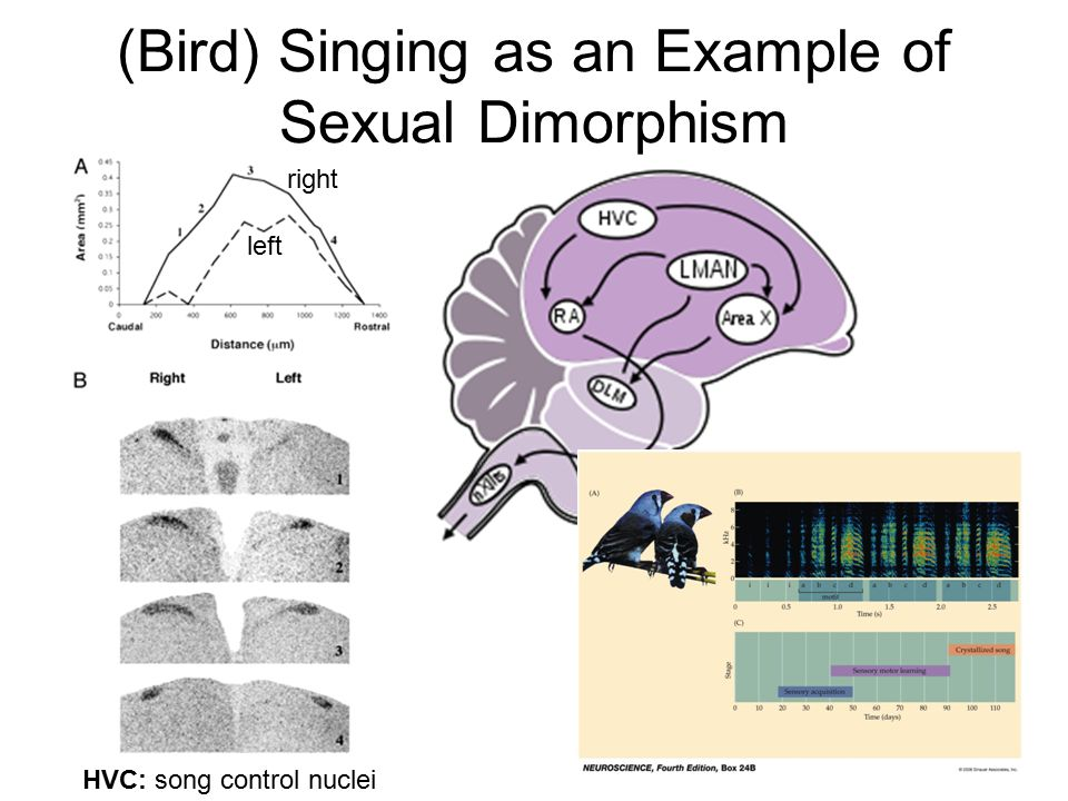 Examples of sexual dimorphism