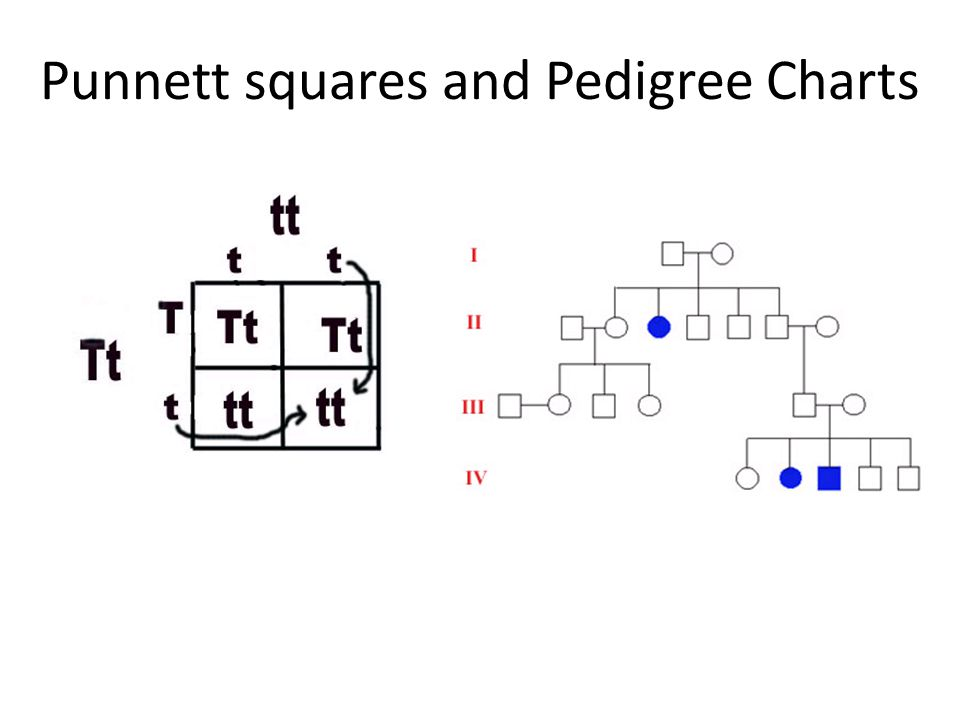 Punnett squares and Pedigree Charts