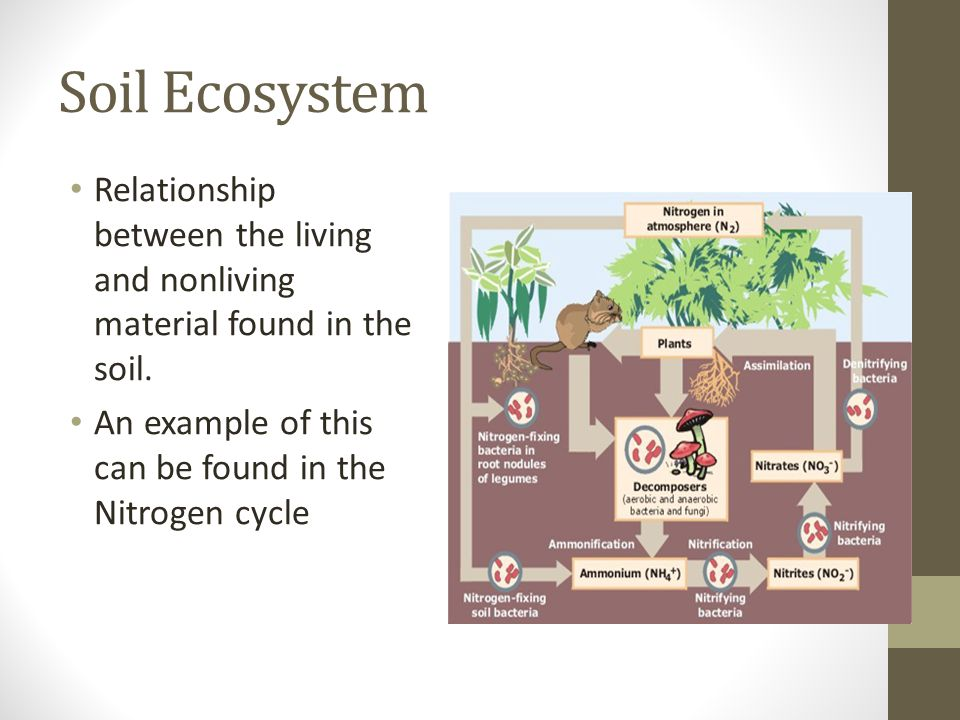 soil science ppt video online download