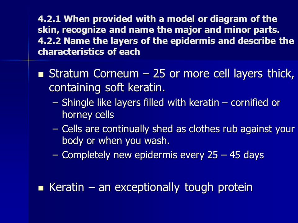 Keratin – an exceptionally tough protein