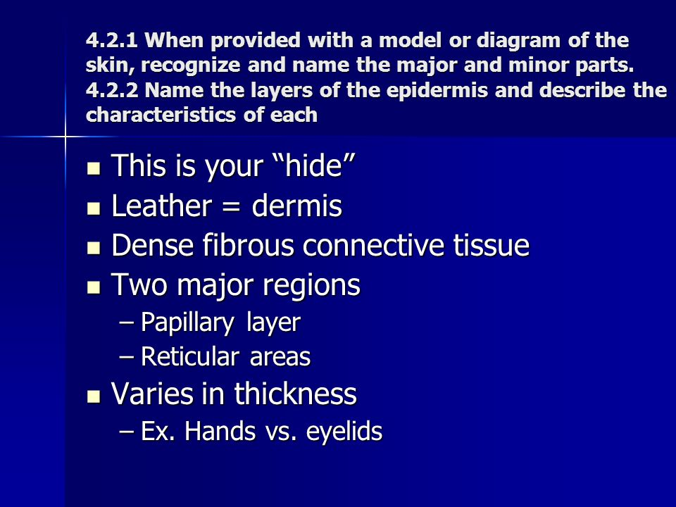 Dense fibrous connective tissue Two major regions
