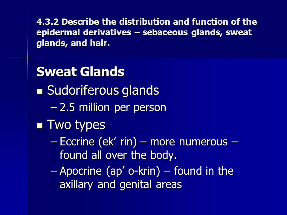 Sweat Glands Sudoriferous glands Two types 2.5 million per person