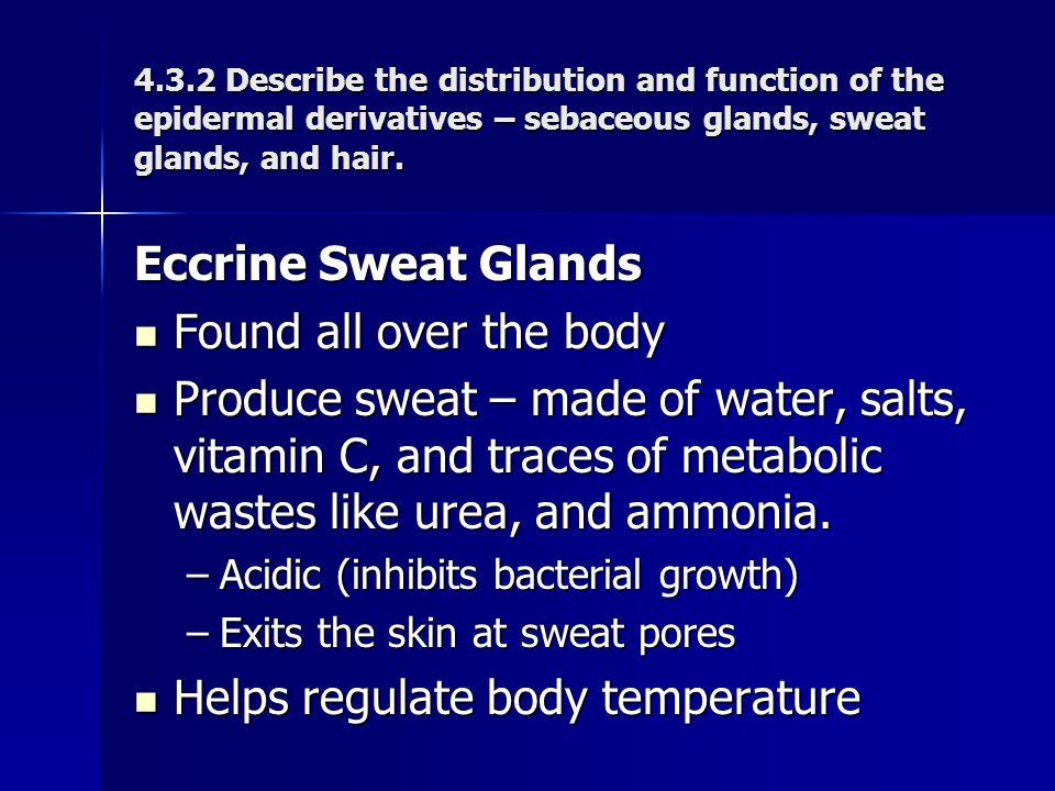 Helps regulate body temperature