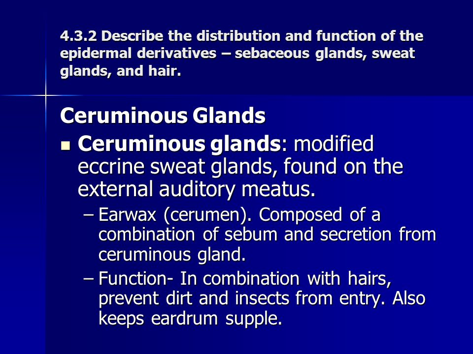 4.3.2 Describe the distribution and function of the epidermal derivatives – sebaceous glands, sweat glands, and hair.