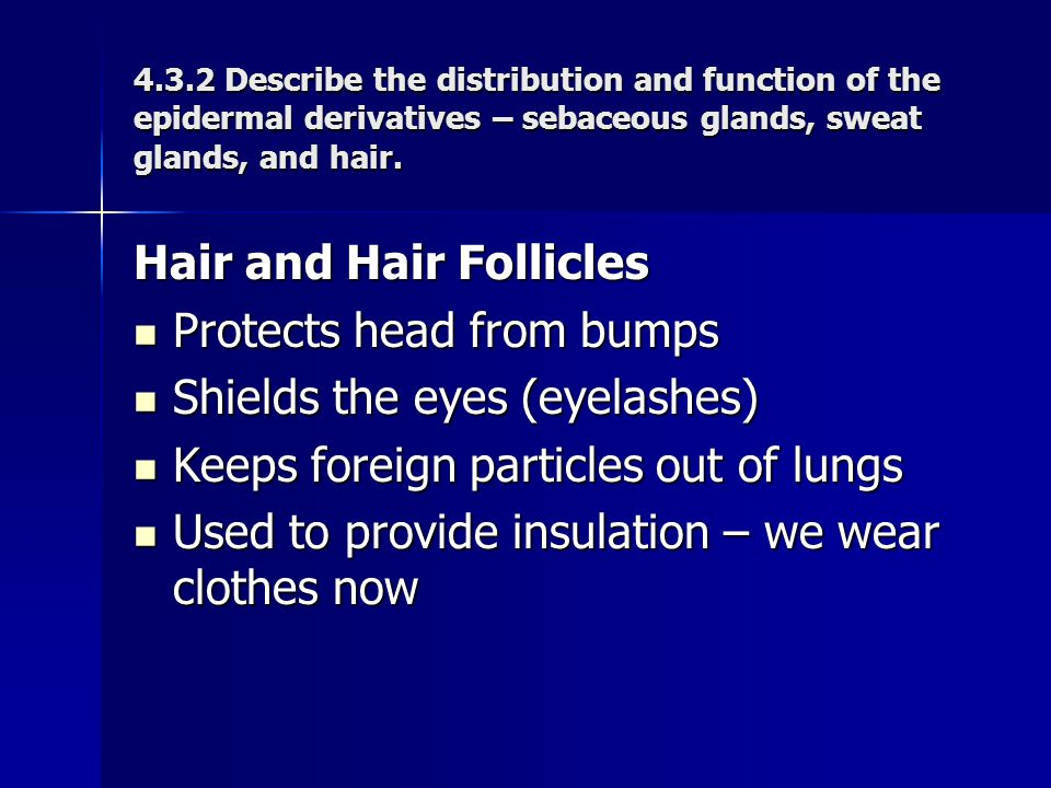Hair and Hair Follicles Protects head from bumps