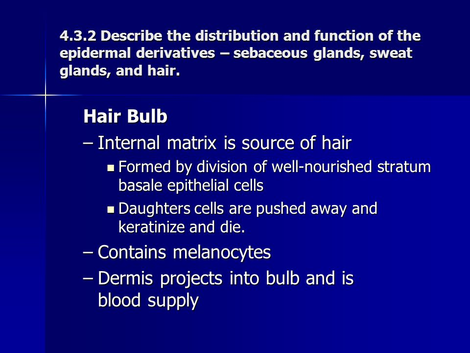 Internal matrix is source of hair