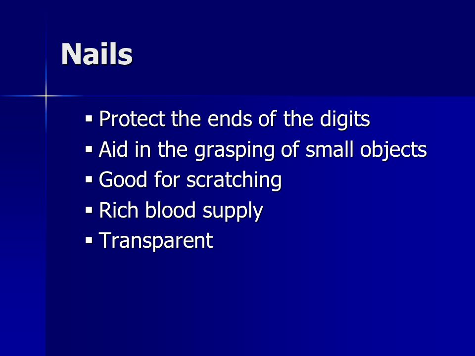 Nails Protect the ends of the digits