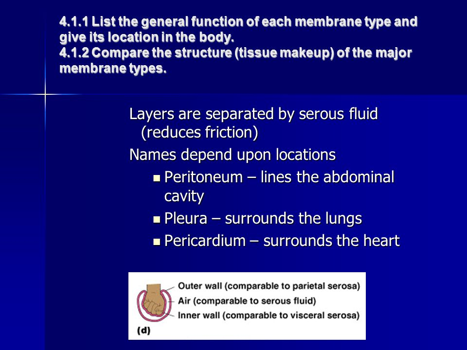 Layers are separated by serous fluid (reduces friction)
