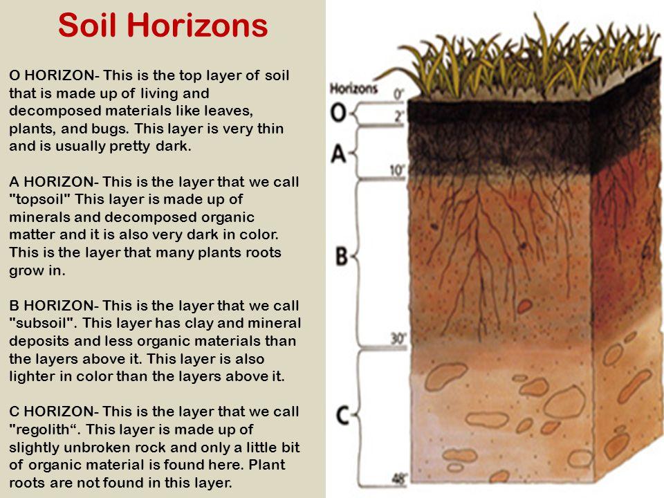 Soil Horizons