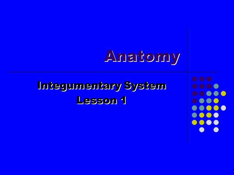 Integumentary System Lesson 1