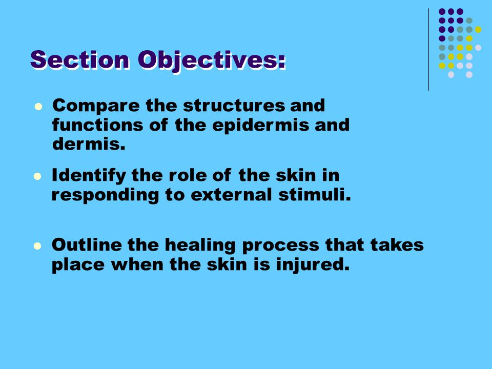 Section Objectives: Compare the structures and functions of the epidermis and dermis.