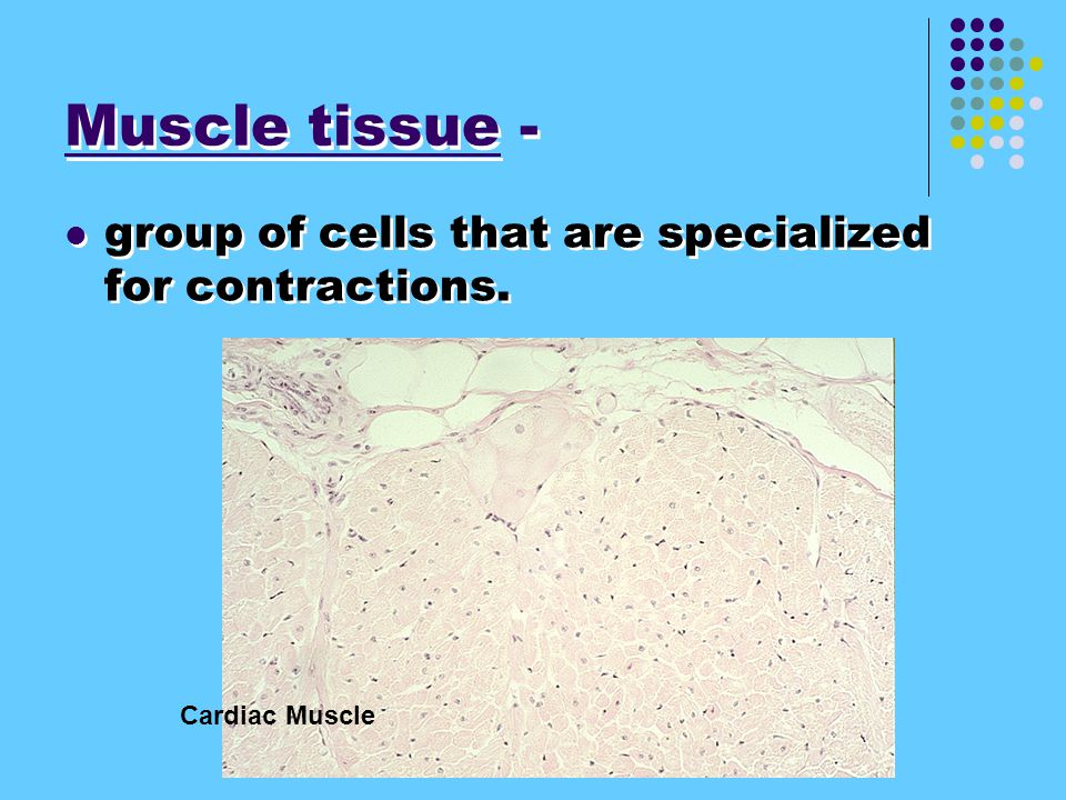 Muscle tissue - group of cells that are specialized for contractions.