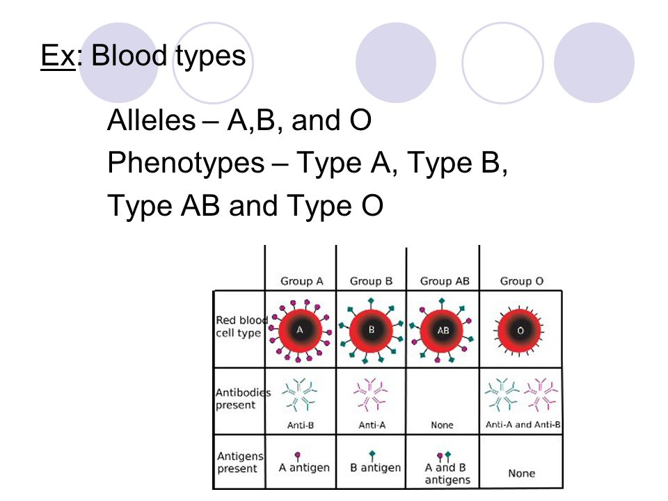 Ex: Blood types Alleles – A,B, and O Phenotypes – Type A, Type B, Type AB and Type O