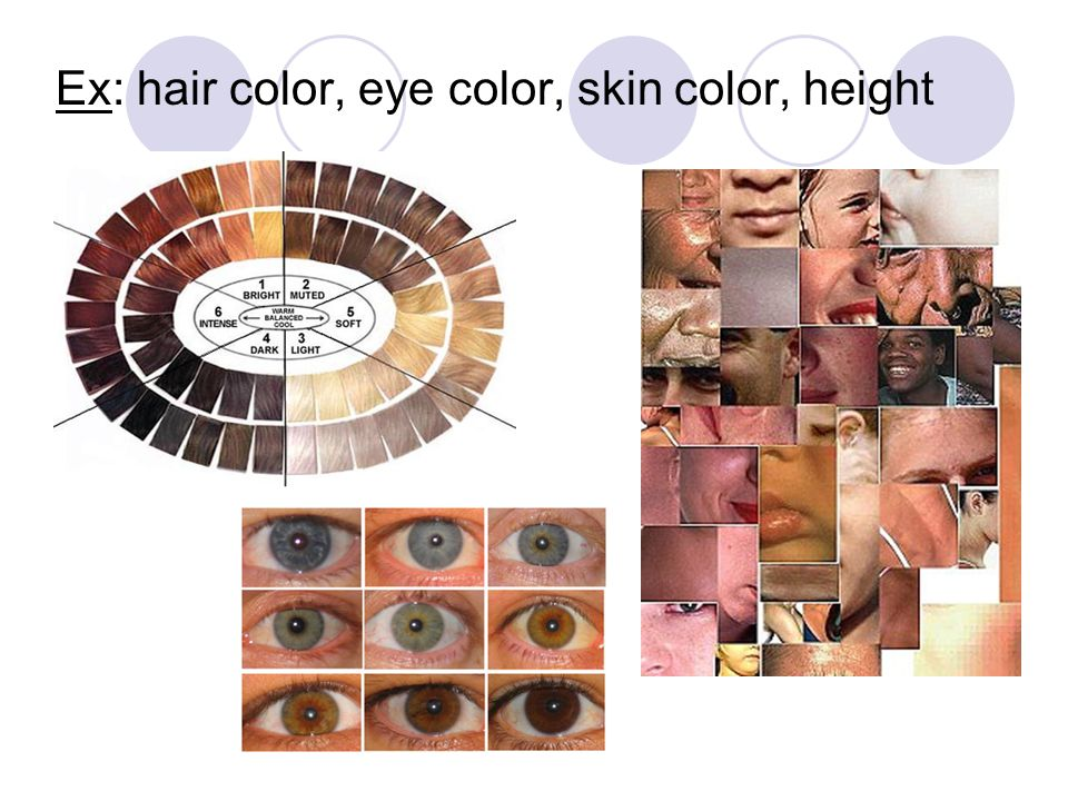 Ex: hair color, eye color, skin color, height