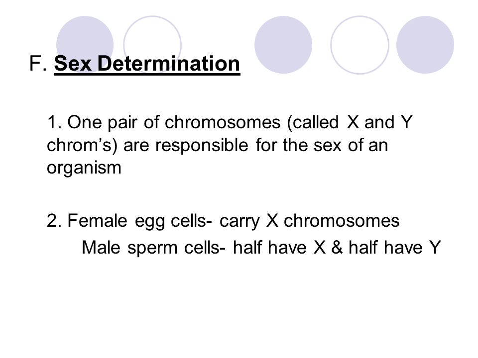 F. Sex Determination 1. One pair of chromosomes (called X and Y chrom's) are responsible for the sex of an organism.