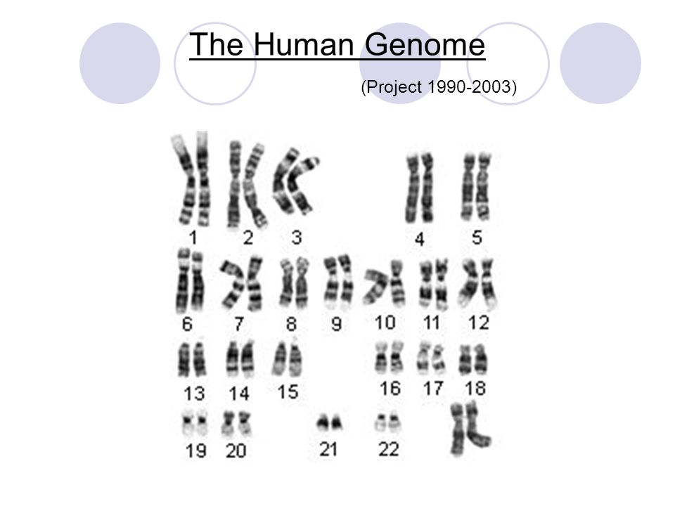 The Human Genome (Project 1990-2003)