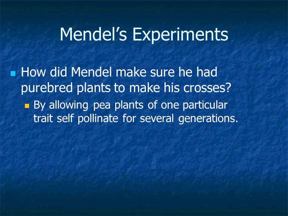 Mendel's Experiments How did Mendel make sure he had purebred plants to make his crosses