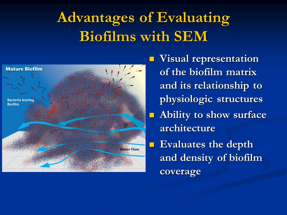 Advantages of Evaluating Biofilms with SEM