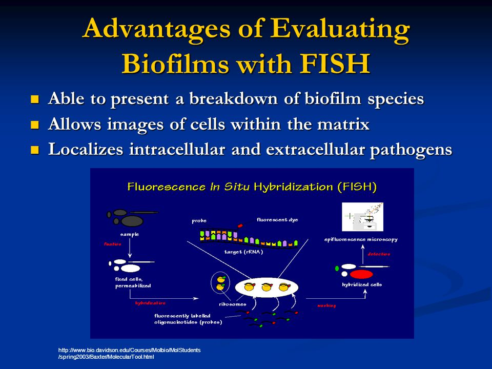Advantages of Evaluating Biofilms with FISH
