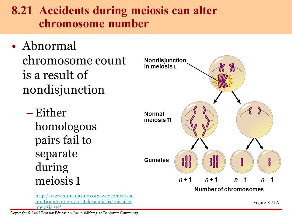8.21 Accidents during meiosis can alter chromosome number