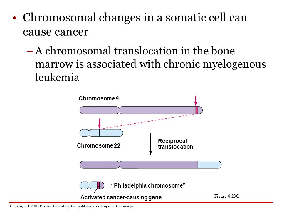 Chromosomal changes in a somatic cell can cause cancer
