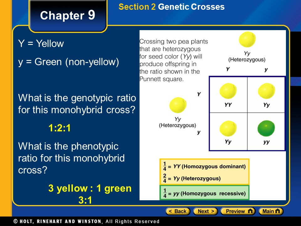 Chapter 9 Y = Yellow y = Green (non-yellow)