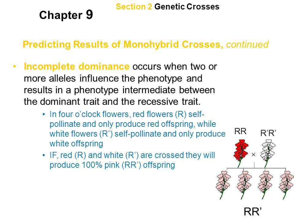Section 2 Genetic Crosses