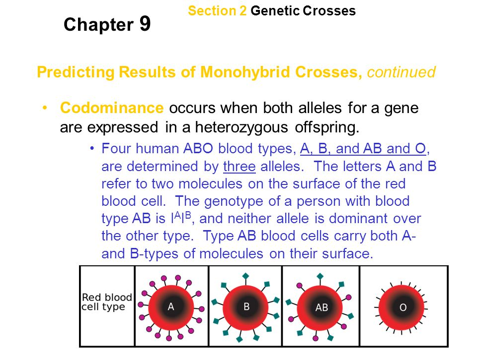 Chapter 9 Predicting Results of Monohybrid Crosses, continued