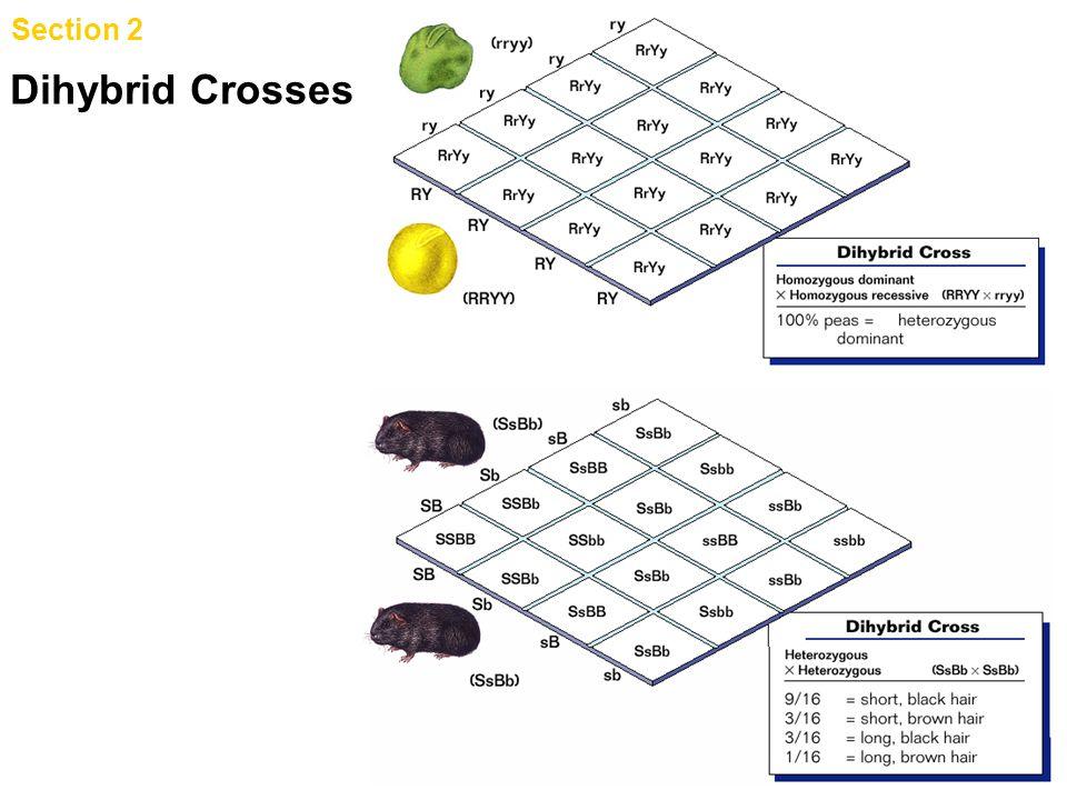 Section 2 Genetic Crosses