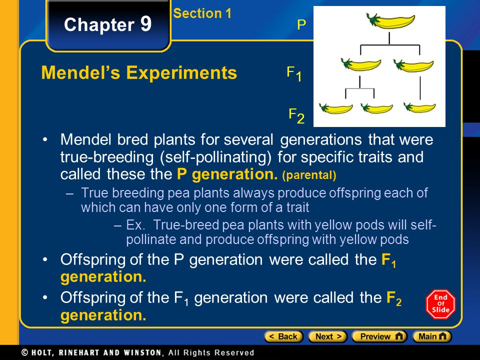 P F1 F2 Chapter 9 Mendel's Experiments