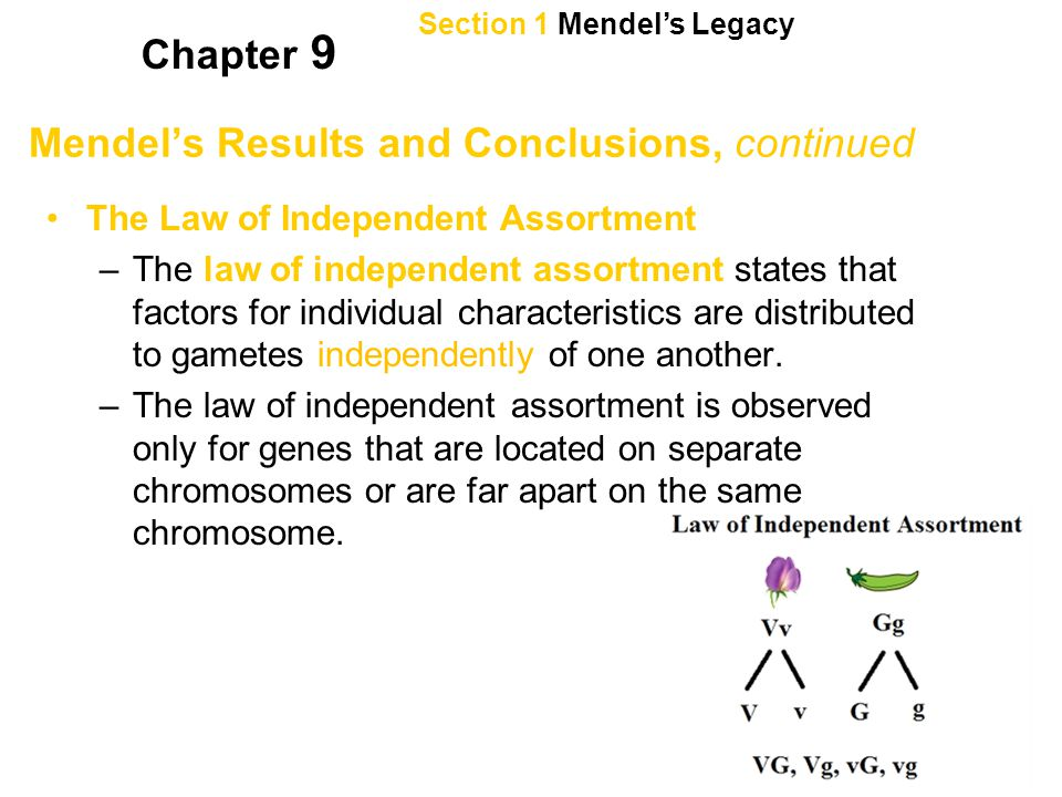 Mendel's Results and Conclusions, continued