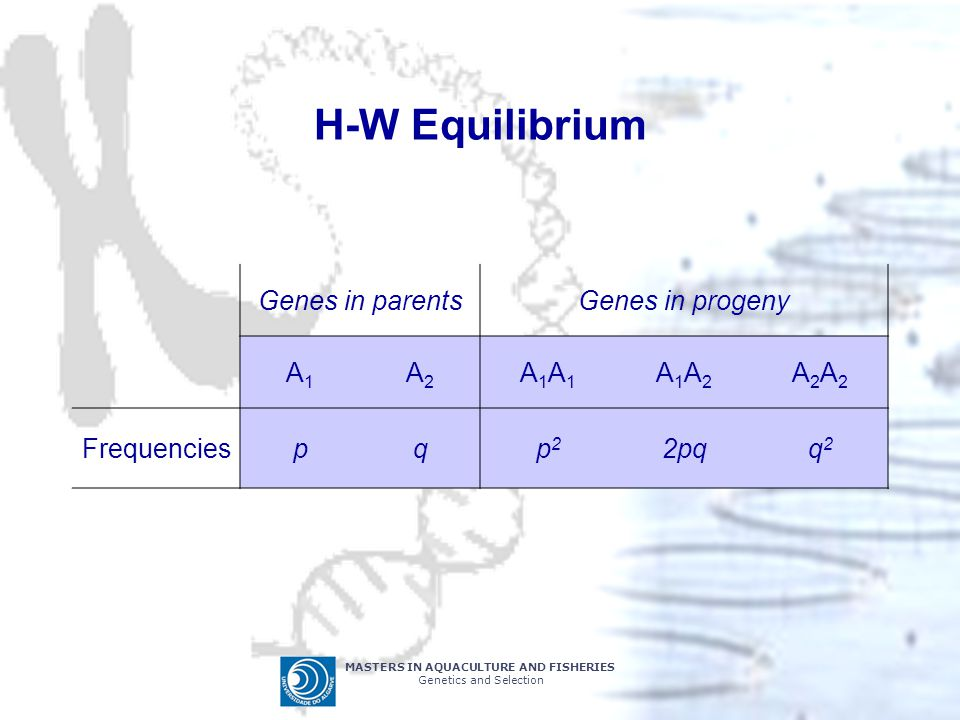 H-W Equilibrium Genes in parents Genes in progeny A1 A2 A1A1 A1A2 A2A2
