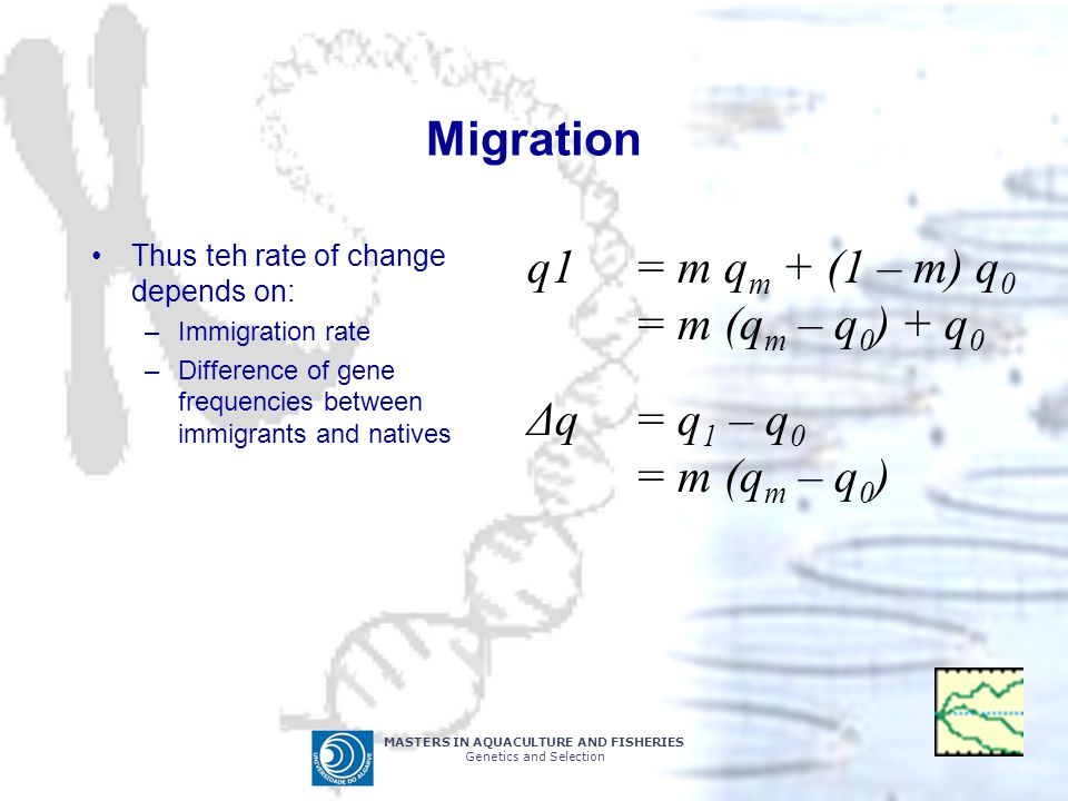 Migration q1 = m qm + (1 – m) q0 = m (qm – q0) + q0 Δq = q1 – q0