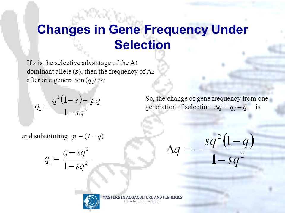 Changes in Gene Frequency Under Selection