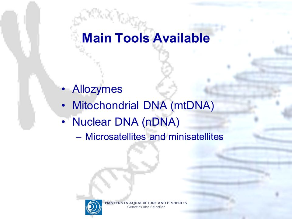 Main Tools Available Allozymes Mitochondrial DNA (mtDNA)
