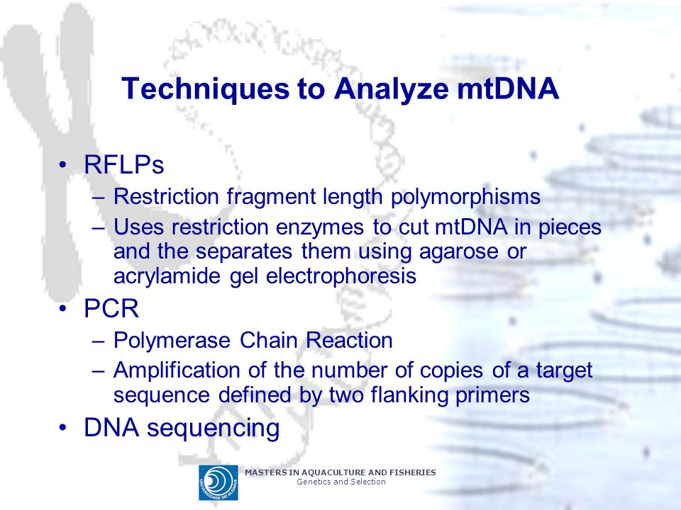 Techniques to Analyze mtDNA