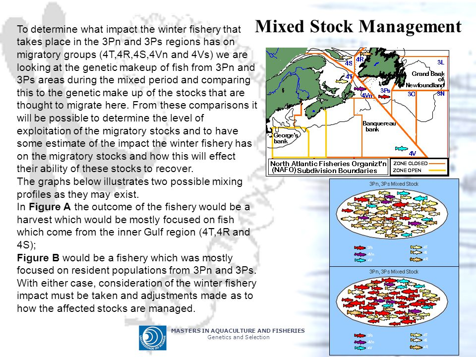 Mixed Stock Management