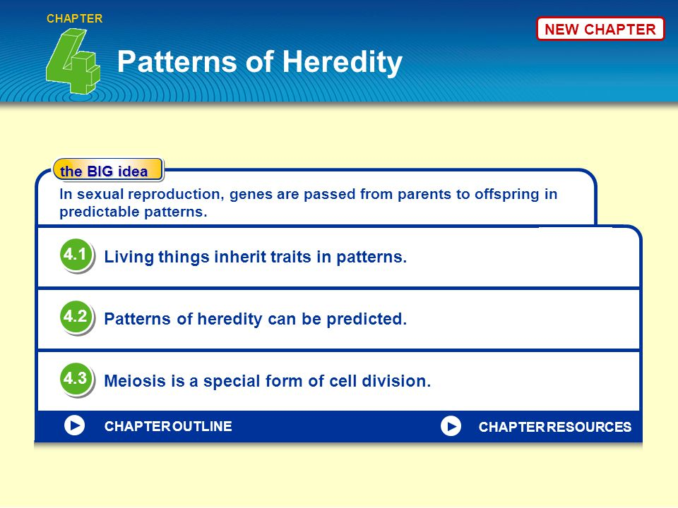 Patterns of Heredity 4.1 Living things inherit traits in patterns. 4.2