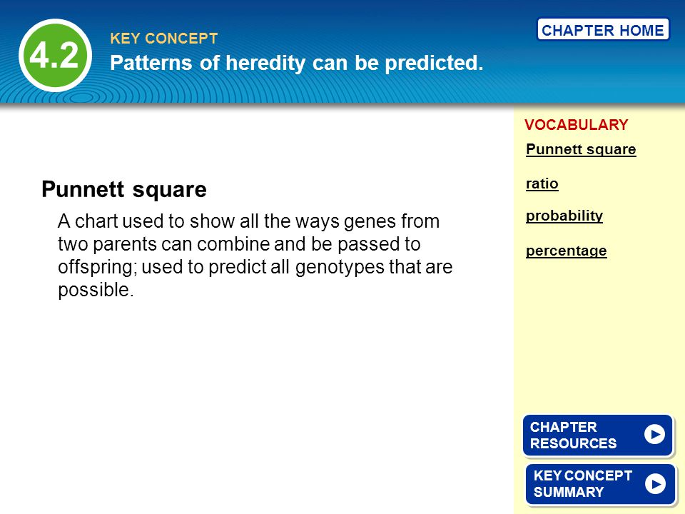 4.2 Punnett square Patterns of heredity can be predicted.
