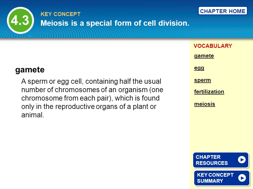 4.3 gamete Meiosis is a special form of cell division.