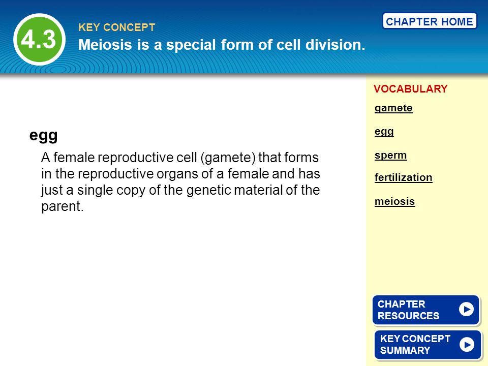 4.3 egg Meiosis is a special form of cell division.