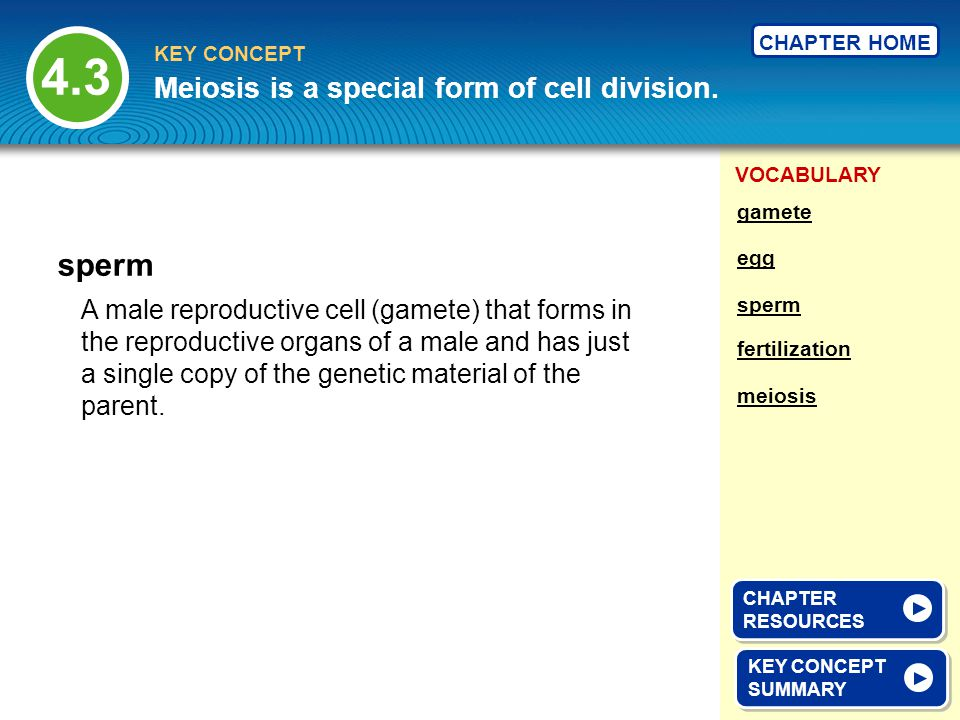 4.3 sperm Meiosis is a special form of cell division.