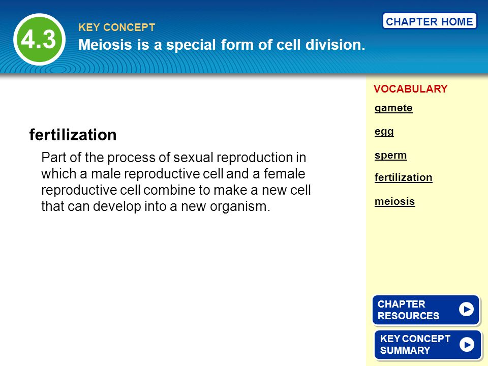 4.3 fertilization Meiosis is a special form of cell division.