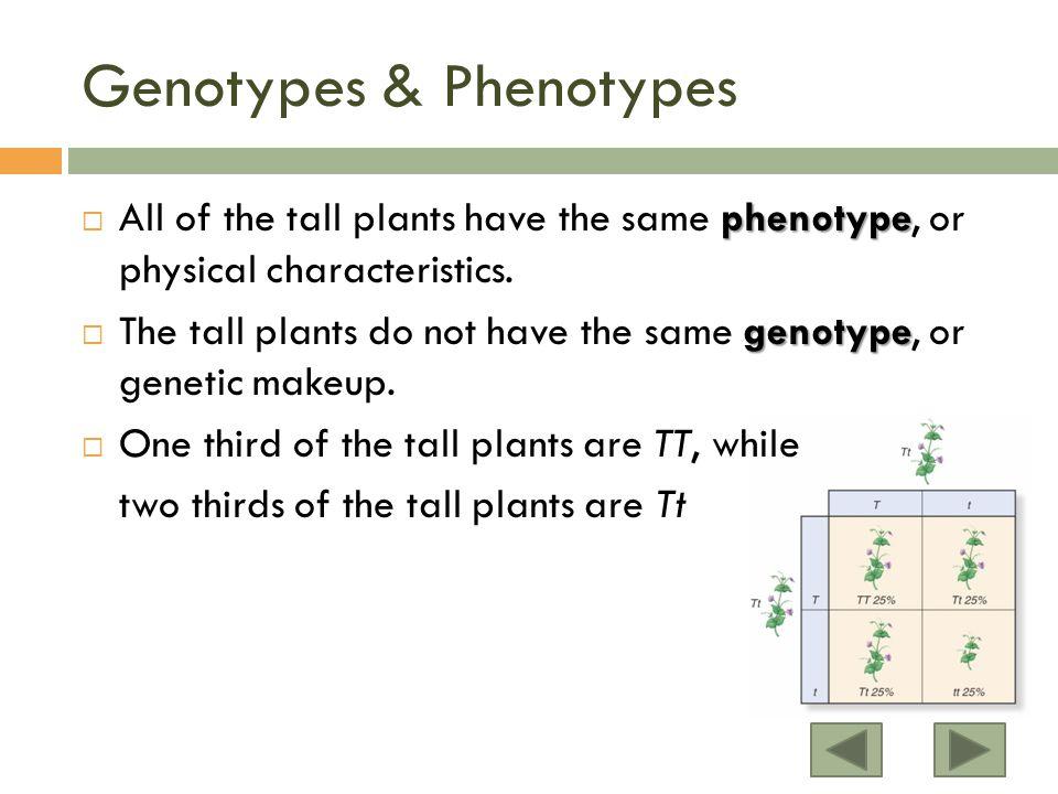 Genotypes & Phenotypes