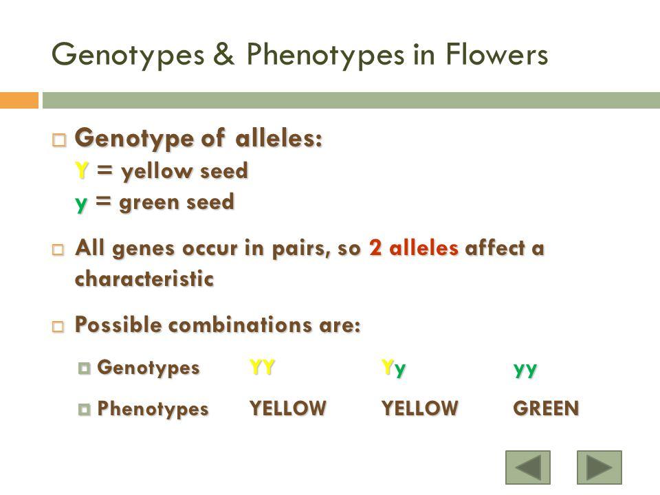 Genotypes & Phenotypes in Flowers