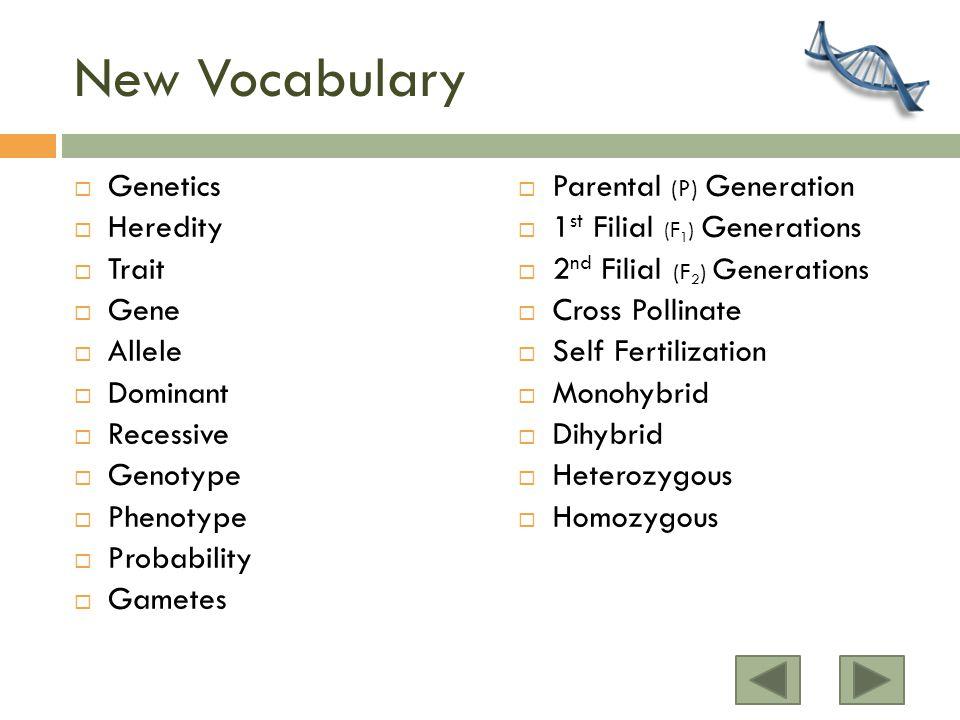 New Vocabulary Genetics Heredity Trait Gene Allele Dominant Recessive