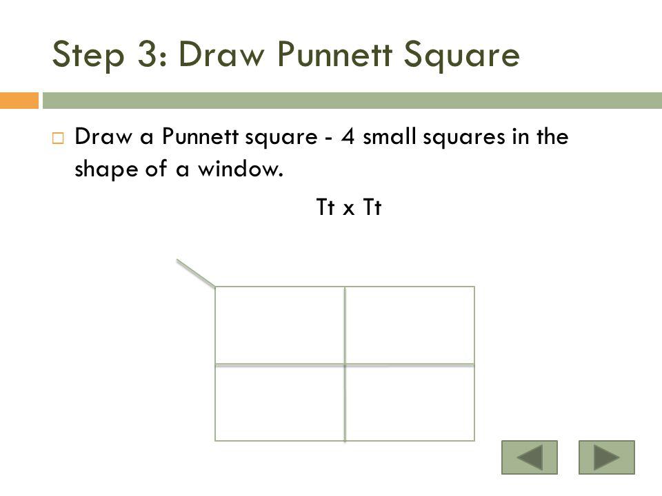 Step 3: Draw Punnett Square