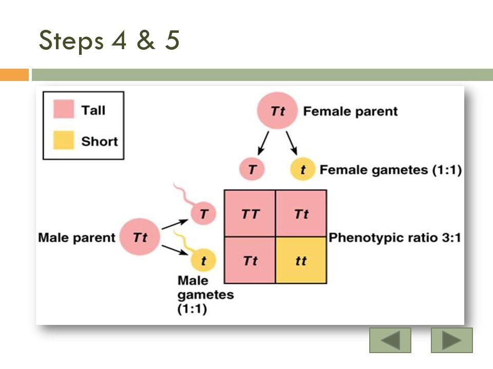Steps 4 & 5